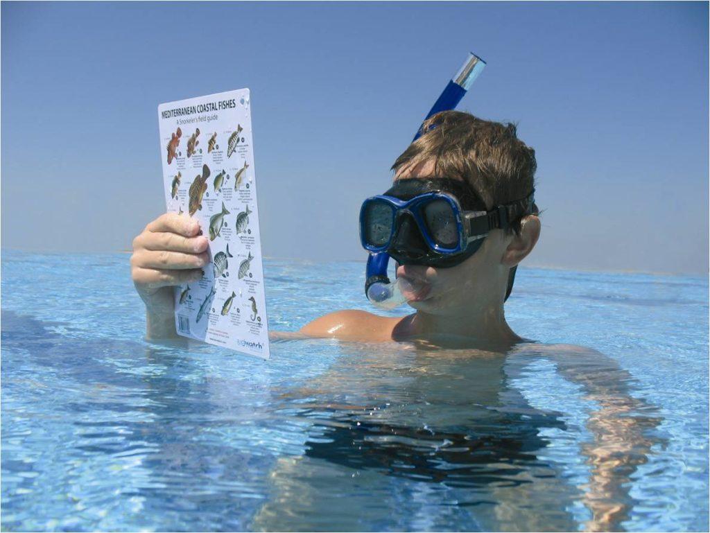 snorkeling_underwater_ biowatching